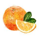 Orange on white background. Watercolor illustration