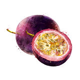 Passionfruit on white background. Watercolor illustration