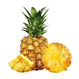 Pineapple on white background. Watercolor illustration