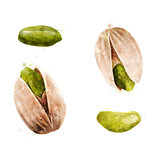 Pistachios on white background. Watercolor illustration