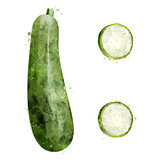 Zucchini on white background. Watercolor illustration