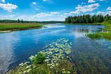 a picturesque river on a sunny day, on the shore - a forest