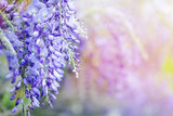 beautiful flowers made with color filters. abstract nature spring Background