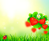 Strawberry, summer background