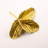 Gold leaf on white background
