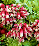 Bundle of Radish Fox