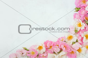 Flower border frame made of pink roses bouquet on a white background. The apartment lay, top view. Floral texture background.