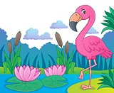 Flamingo topic image 5
