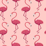Flamingos Pink Seamless Pattern