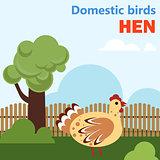 Domestic bird hen