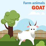 Farm animal goat
