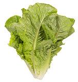 Volumetric green salads in big size on white background.