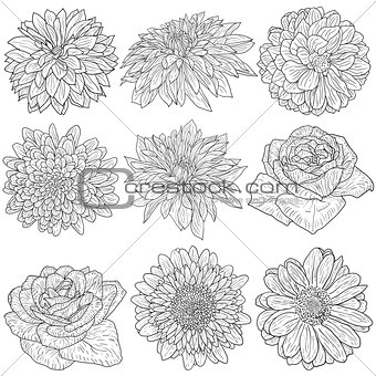 Beautiful monochrome sketch, black and white flower isolated