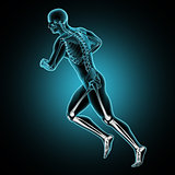 3D male medical figure running with leg bones highlighted