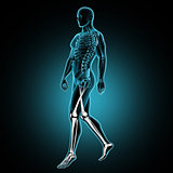 3D male medical figure walking with leg bones highlighted