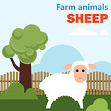 Farm animal sheep