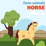 Farm animal horse