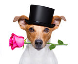 valentines dog with a rose