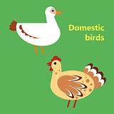 Domestic birds duck and hen