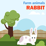 Farm animal rabbit