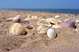 Sea and seashells. Beach and colorful seashells close-up on the beach coast