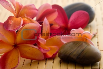 Frangipani and polished stone