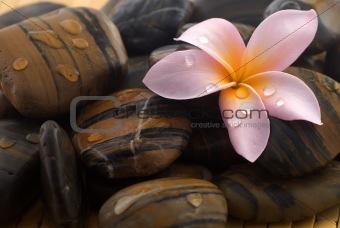 Frangipani and polished stone