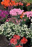 Tulip stall