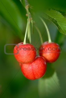 three red cherries