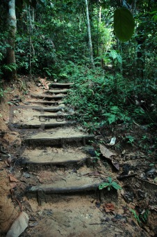 Tropical Jungle Trek Path