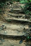 Tropical Jungle Trek Path