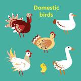 Set of Domestic birds