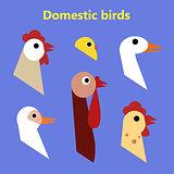 Set of Domestic birds heads