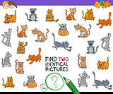 find two identical cat pictures game for kids