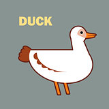 Domestic bird duck simple