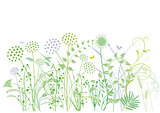 Grasses, herbs, plants, illustration