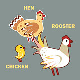 Domestic birds rooster, hen and chicken on grey