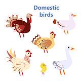 Set of Domestic birds white