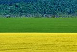 Barley and Rapeseed Field