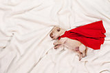 Newborn labrador puppy with red superhero cape sleeping on white