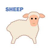 Farm animal sheep isolated