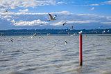 Seagull on red stake, Rotorua lake, New Zealand