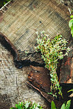 Fresh herbs on wood