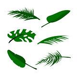 Tropical vector floral set
