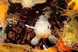 Fantastic and colorful Japanese koi carp in the aquarium