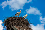 Storks sit in the nest on the roof in the summer