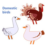 Domestic birds turkey, duck and goose on white