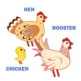 Domestic birds rooster, hen and chicken on white