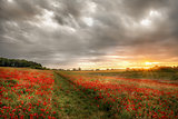 Path through wild poppies at dawn