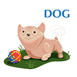 Educational flashcard dog plays with ball on the grass